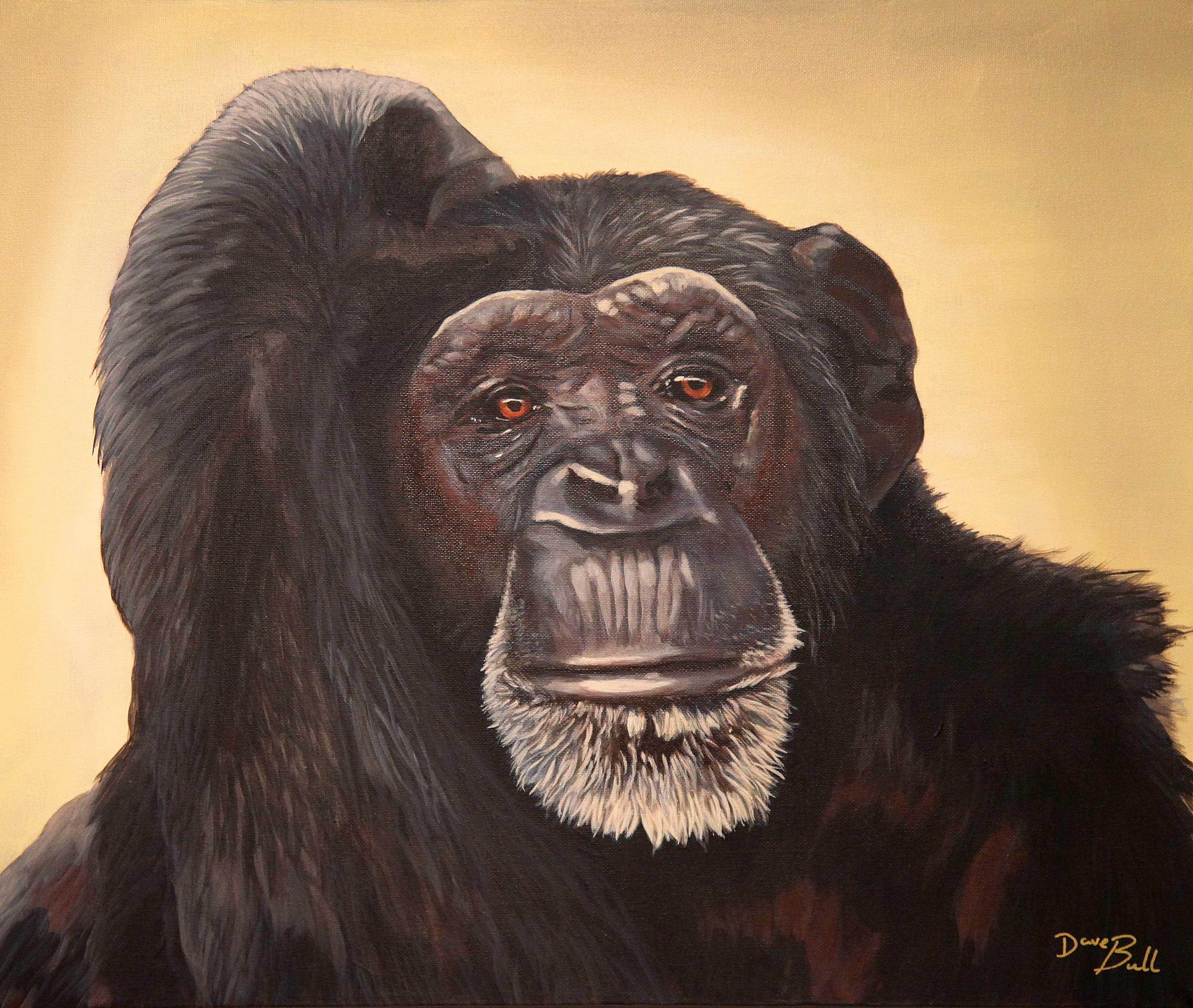 Chimp - 60 x 50 cm