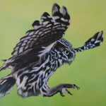 Owl 100 x 70 cm (Close up)