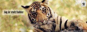 Tiger_fadder